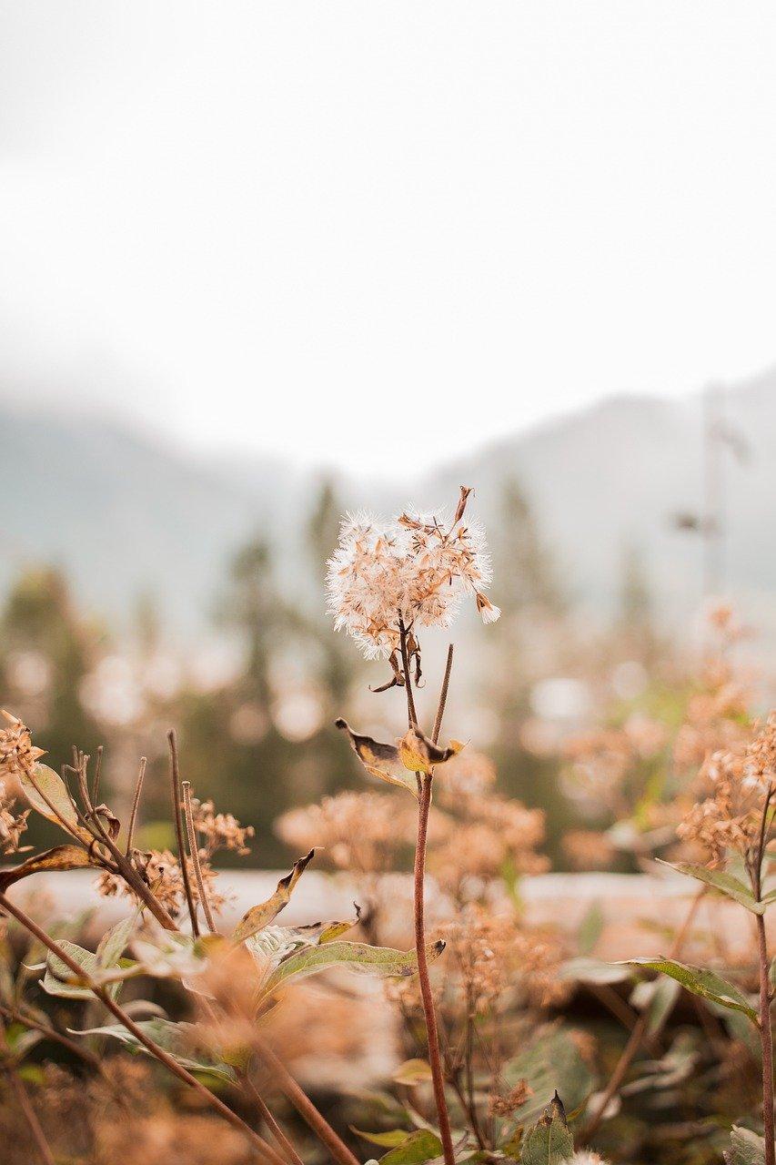 autumn, flowers, plants